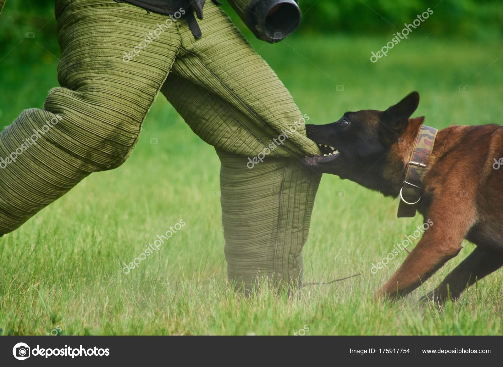 chien cherche homme)