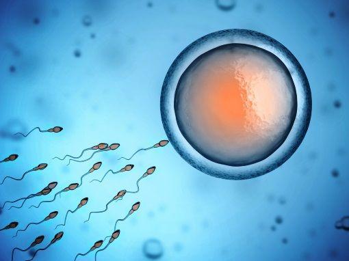 temps rencontre spermatozoide ovule site rencontre gluten