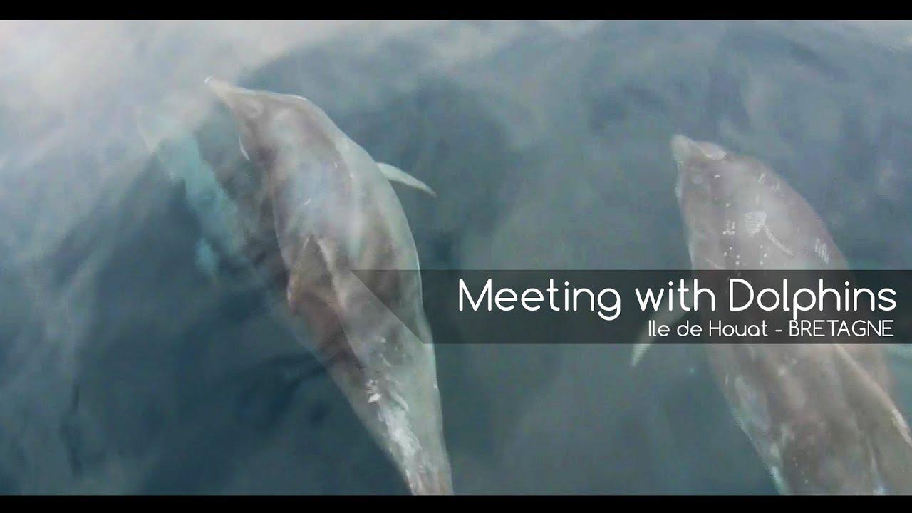 Où voir des dauphins en Bretagne ?
