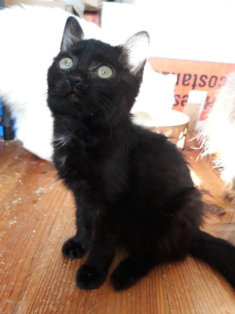 Comment présenter un nouveau chaton à son chat ?