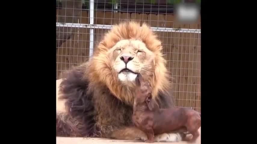 Comment Savoir si un Homme Lion est Amoureux de Moi ?