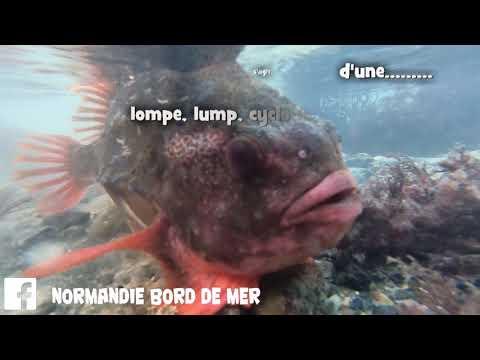site de rencontre fish