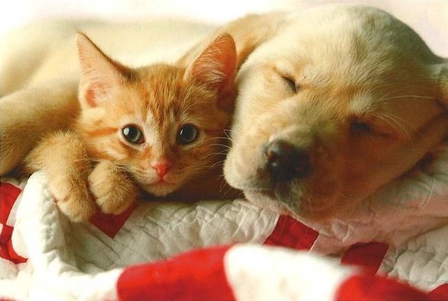rencontre entre chien et chat adulte