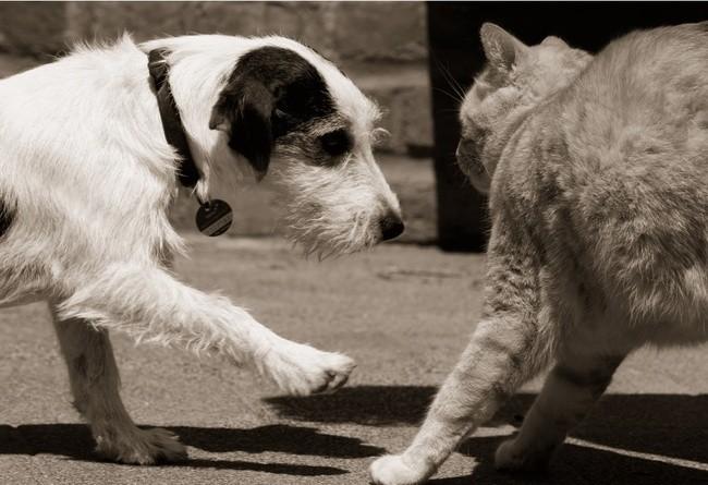 premiere rencontre chat et chien site de rencontre meetic payant