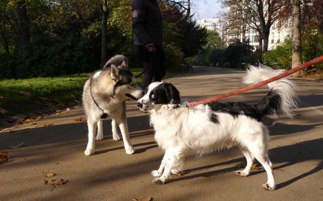 site de rencontre amis des chiens