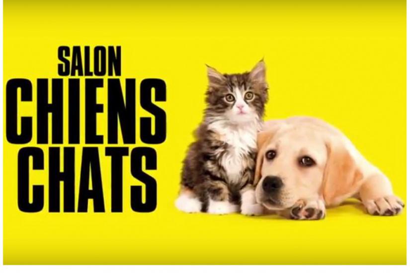 Un Tinder pour chats? Ça existe
