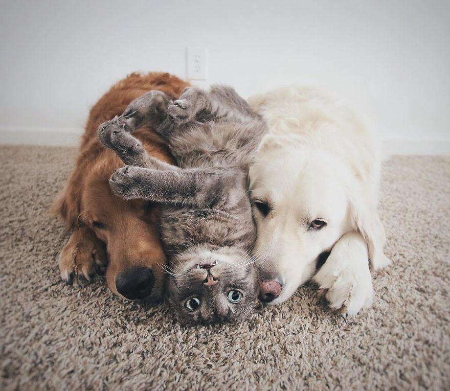 Réseau social, Facebook des animaux, site de rencontres chiens, chats, rongeurs - Wamiz