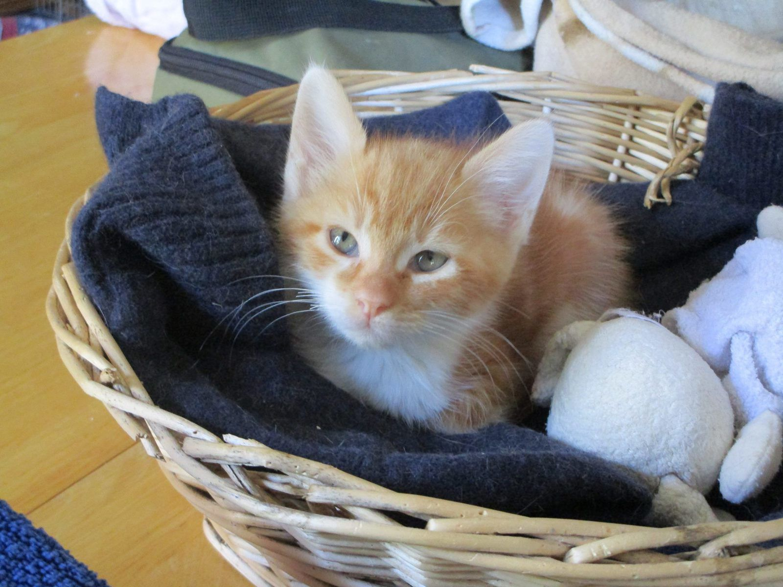 rencontre et chat maroc premiere rencontre amoureuse poeme