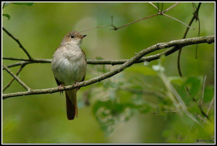 site de rencontre oiseaux)
