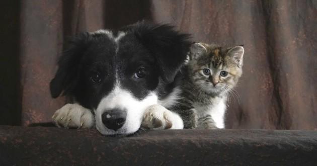 premiere rencontre chat et chien