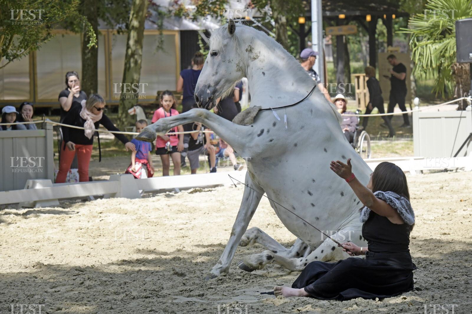 Rencontres-Éecolalies.fr - Le site de rencontre des passionnés d'équitation