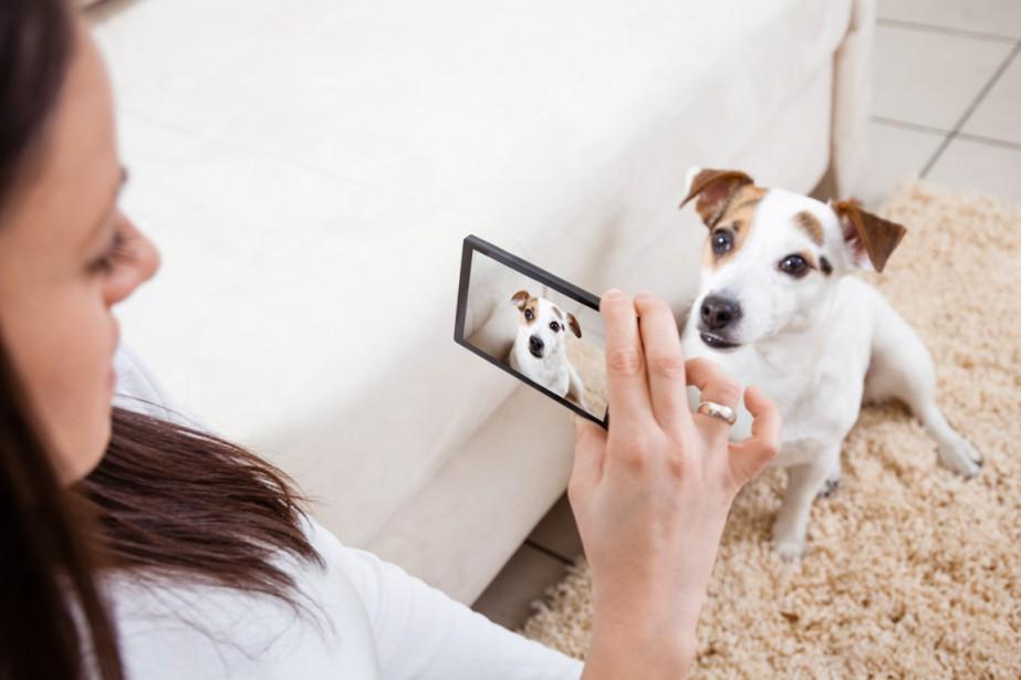 site de rencontre entre personnes aimant les animaux)