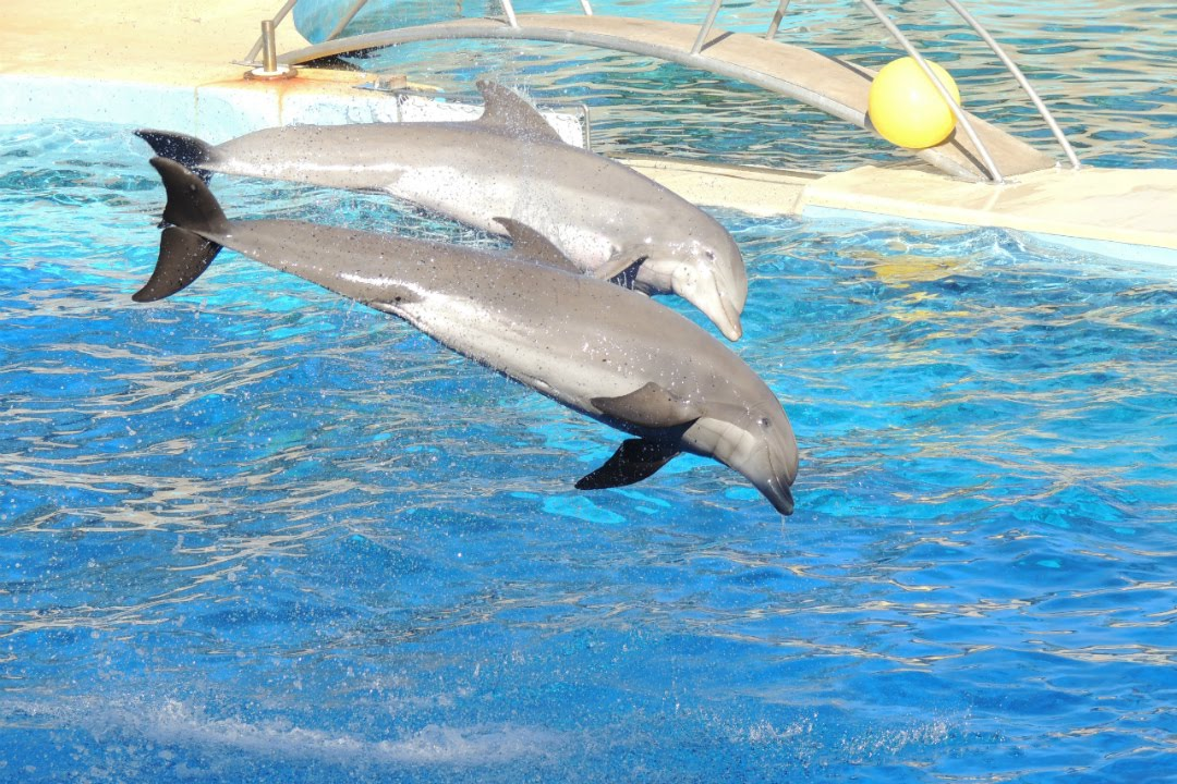 video rencontre dauphin marineland)