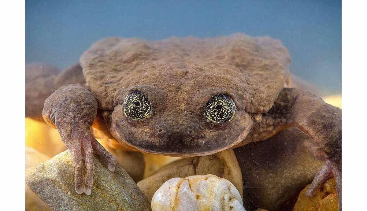site rencontre grenouille