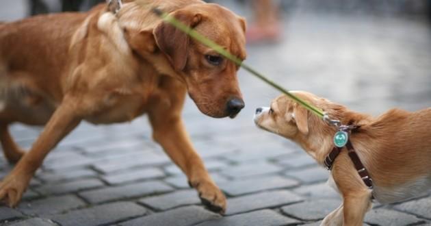 Premier site de rencontre pour chien