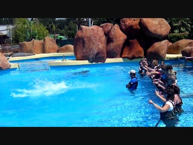 code promo marineland rencontre avec les dauphins)