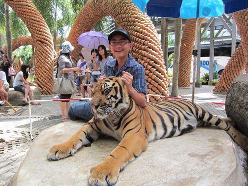 Thaïlande : chasse au tigre après deux attaques mortelles