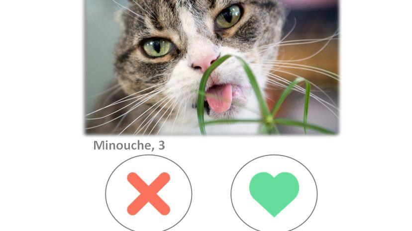 site de rencontre chat animaux