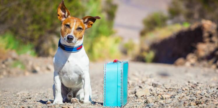 Amour : faire des rencontres grâce à son chien ou chat