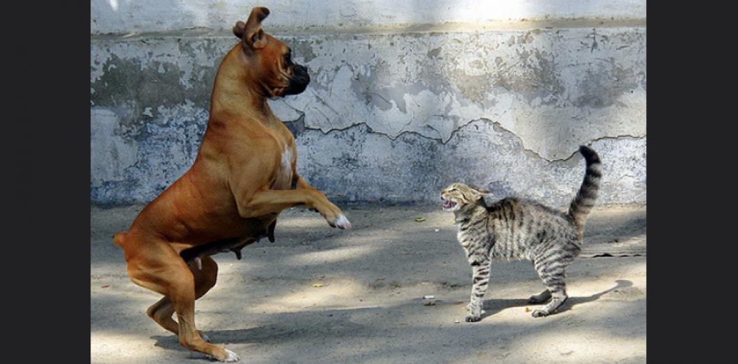 Des sites de rencontres pour chien et chats !