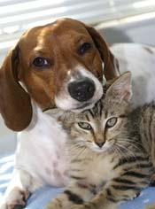 site de rencontre pour animaux de compagnie