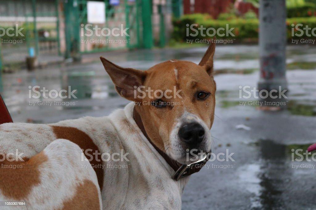 chien cherche homme
