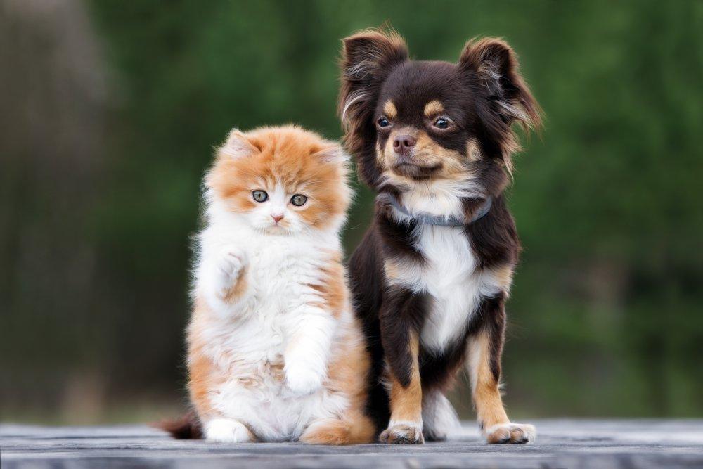 site de rencontre amis des chiens)