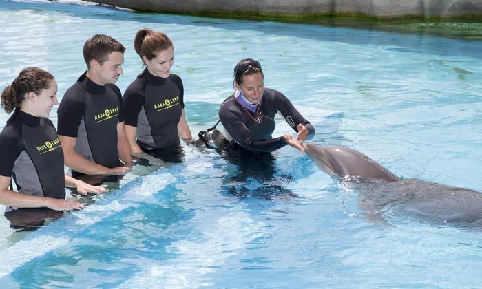 rencontre avec dauphin marineland