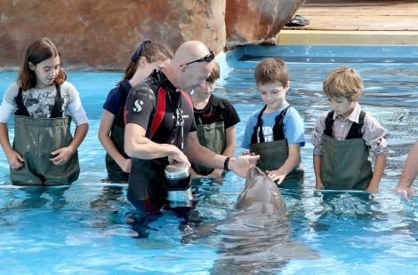 video rencontre dauphin marineland)