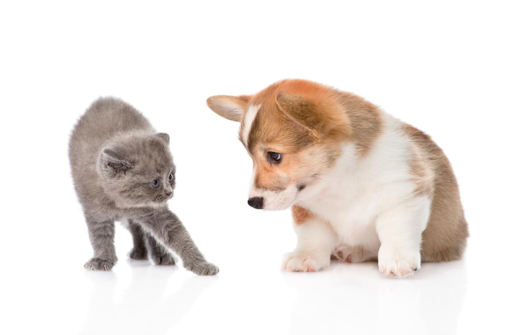Cohabitation entre chiens et chats : Pour que le rêve devienne réalité!