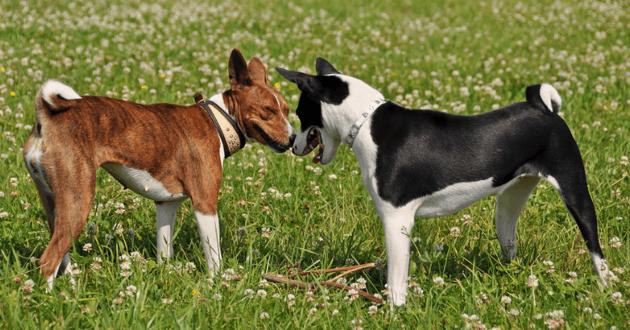 site de rencontre de chien