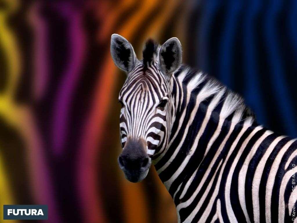 site rencontre zebres)